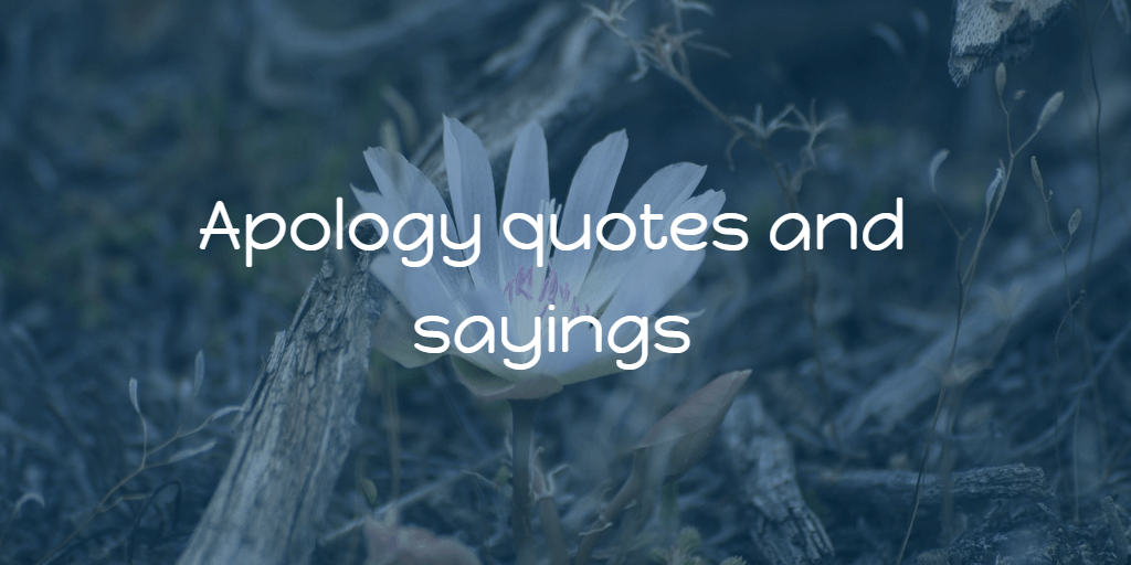 Apology quotes and sayings